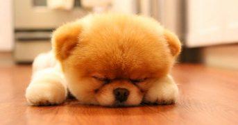 20 лучших фото милейших щенков