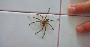 Почему не стоит убивать пауков в своем доме?