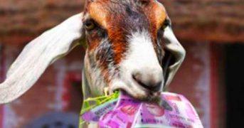 Хозяева приготовили на вертеле козу, съевшую у них 20 тысяч евро