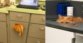 Как коты прячутся от ветеринаров: смешные фото