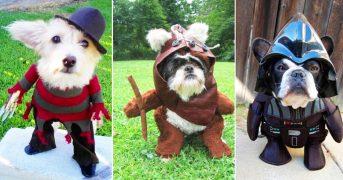 Лучшие костюмы для собак на Хэллоуин (18 фото)